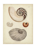 Antique Nautilus II Prints by George Wolfgang Knorr