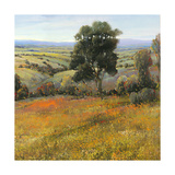 Field in Summer Premium Giclee Print by Tim O'toole