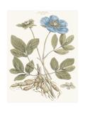 Bashful Blue Florals I Print by John Miller