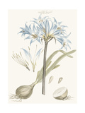 Bashful Blue Florals II Prints by John Miller