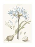 Bashful Blue Florals II Prints by John Miller