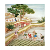 Chinese Farmers Harvesting Rice Giclee Print