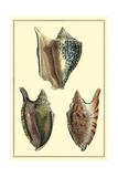 Classic Shells II Affiches par Denis Diderot