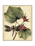 Petite Dragonflies I Poster von  Vision Studio