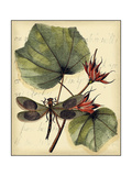 Petite Dragonflies I Prints by  Vision Studio