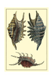 Classic Shells III Posters by Denis Diderot