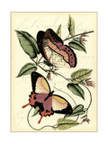 Petite Butterflies I Posters by  Vision Studio