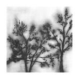 Silvery Trees II Prints by Jennifer Goldberger