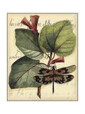 Petite Dragonflies VI Prints by  Vision Studio