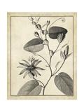 Passiflora VI Poster von Charles Francois Sellier