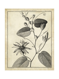 Passiflora VI Prints by Charles Francois Sellier