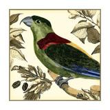 Tropical Parrot IV Arte di  Martinet