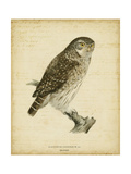 Non-Embellished Vintage Owl Posters by Von Wright