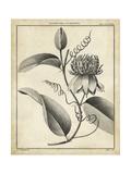 Passiflora V Kunstdrucke von Charles Francois Sellier