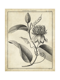 Passiflora V Prints by Charles Francois Sellier