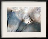 Carefree Framed Giclee Print by Ursula Abresch