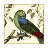 Tropical Parrot III Poster di  Martinet