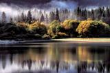 Forest - Autumn Lights - Reprodüksiyon