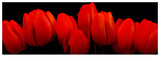 Crimson Tulips Prints by  Crum