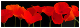 Vermilion Poppies Print by  Crum