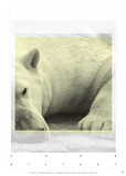 Polar Bear Soon History Affiches par Antoine Tesquier Tedeschi
