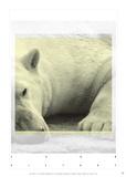 Antoine Tesquier Tedeschi - Polar Bear Soon History - Reprodüksiyon