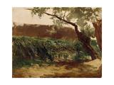 Bullrush (Piedra), Ca. 1872 Giclee Print by Carlos de Haes