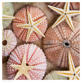 Starfish & Sea Urchins Poster by  Bramwell
