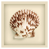 Radial Seashell Prints