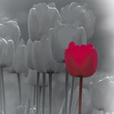 Tulip Accent II Prints by Katja Marzahn