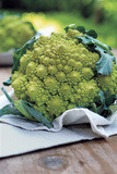 Roman Broccoli Photographic Print