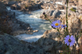 Wildflowers Above the Rapids of Great Falls on the Potomac River Photographic Print by Vickie Lewis
