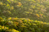Sunlight on the Rainforest in Monteverde Photographic Print by Michael Melford