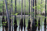 Cypress Trees Surround a Pond on a Ranch Photographic Print by Carlton Ward