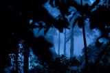 A Dense Rainforest on Borneo Fotografisk tryk af Mattias Klum