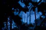 A Dense Rainforest on Borneo Photographic Print by Mattias Klum