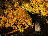 An Oak Tree, Quercus Species, with Colorful Leaves in Autumn Photographic Print by Babak Tafreshi