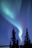 The Aurora Borealis, or Northern Lights, over Silhouetted Evergreen Trees Fotografisk tryk af Ira Meyer