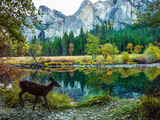 Colorful Trees, Rugged Mountains and a Browsing Deer in a Scenic Autumn Landscape Fotoprint van Babak Tafreshi