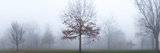 A Landscape with Trees in a Heavy Fog Photographic Print by Stephen Alvarez