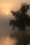 A Bald Cypress Tree Along Lake Russell at Sunrise Photographic Print by Carlton Ward