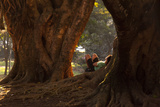 A Man Resting Against a Tree Trunk at Sunset in Ibirapuera Park Photographic Print by Alex Saberi