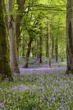 Glenariff Forest Park in County Antrim Fotografisk tryk af Chris Hill
