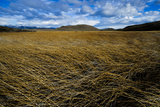 Marshland in Torres Del Paine National Park Photographic Print by Mattias Klum