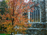 A Sugar Maple Tree in Autumn Hues on the Grounds of Bates College Fotografisk tryk af Babak Tafreshi