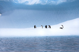 Gentoo Penguins, Pygoscelis Papua, on a Blue Iceberg in the Area known as Iceberg Alley Photographic Print by Ira Meyer