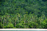 Tropical Rainforest and Palm Trees Line a Beach on a Deserted Island Fotografisk tryk af Jason Edwards