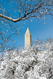 The Washington Monument Rises Above Snow-Covered Trees Photographic Print by Vickie Lewis