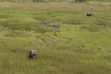 Aerial of Two African Elephants in a Vast Sea of Lush Green Grass and Small Water Channels Photographic Print by Beverly Joubert