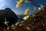 Orchids on Granite Cliffs Above the Atlantic Ocean in Serra Da Tiririca State Park Photographic Print by Mattias Klum